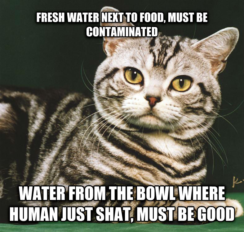 Cats And Water Memes